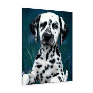 Dalmatian Canvas Print